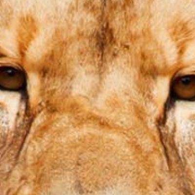 FREELANCER Profile Image